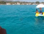 Zakynthos, żółwie Careta Careta - uwaga - pojawił się żółw, wszystkie statki z okolicy płyną w to miejsce :-)