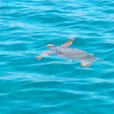 Zakynthos, żółwie Careta Careta