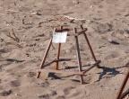 Plaża Dafni - przy każdym miejscu gdzie są złożone jaja żółwi jest karteczka z datą złożenia jaj